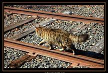 Cats walk