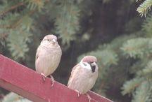 ptaki  male