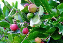 Fruits et légumes des Antilles