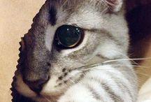 kociaczek