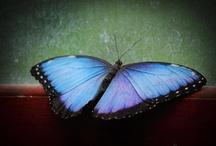 Butterflies & Bugs & Spiders / by Susan Pletscher