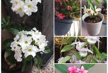 Plants in My Garden / Plants I grow in my garden