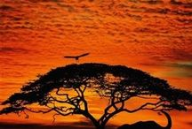 africa / All things African - one of my favourite places. I love the colours the smells, the animals and the people..
