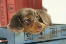 Adorable doggies / by Constantina Ioannou