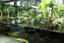 Naturalistic enclosures/exhibits / A well researched and designed exhibit is a work of art