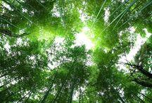 Tree bathing / Shinrin Yoku - the Japanese practice of Forrest bathing