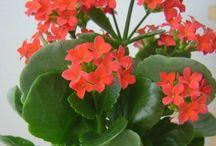 flori interior
