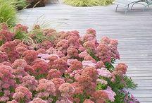 rośliny przed dom