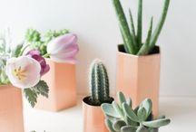 Cacti And alovera plants