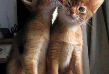 Kissat / Kuvia erillaisista kissoista