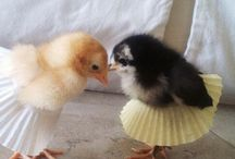 CLUCK! / Fowl things
