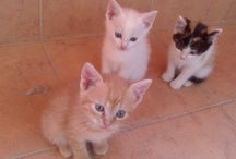 My kitties :3 <3 / Crazy pictures