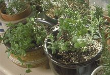veggies and herbs I want to grow