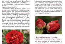 Le Camélia Fondation Luciano Pavarotti