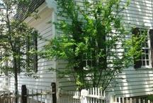 Colonial Williamsburg / by Judith Cameron