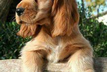 Notre chien ♥️