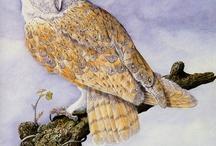 живопись сова