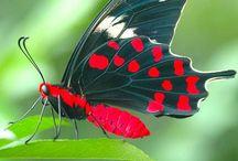 perhosystäväni