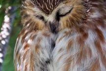 Owlприрода
