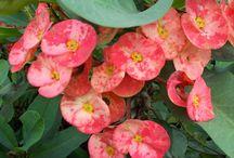 Tanaman hias / Tanaman hias merupakan bagian peting di halaman anda untuk memperindah dan memberikan kesan asri