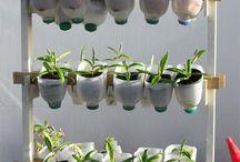 mur plante