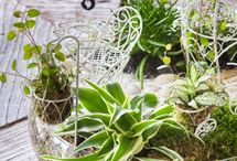 plantjes in een schaal