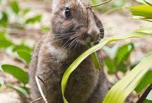 Animais | Fotos de Viagem / Fotografias de animais vistos em viagens pelo mundo.