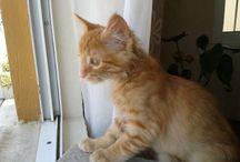 Bruno  / Cat