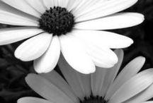 B&W flower photo