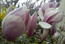 MES FLEURS au fil des saisons / Je souhaiterais vous faire partager ma passion des fleurs ...