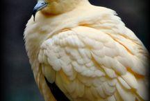 Birds / All types of birds