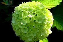цветы - украшение нашей жизни