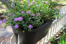 Garden Ideas!  / by Violeta Mena