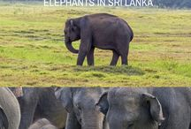T R A V E L | Sri Lanka