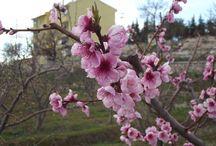 Karaman'dan Bahar Fotoğrafları / Karaman'dan Bahar Fotoğrafları