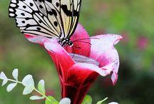 Animals - Beautiful / by Crimson Chica