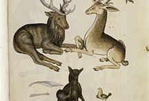 bestiary ideas