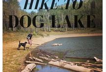 Dog Friendly Hikes in Utah / It can be hard to find dog friendly hike with Utah having several protected watersheds and national parks.  Here is a list of my favorite dog friendly hikes!