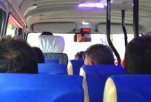 Minibus Halleri