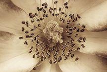 Foto: blommor