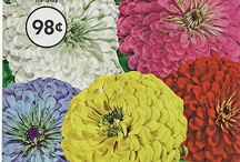 Vintage Seed Packets and Catalogs / packs of flower seeds bulbs / by Pam Harbuck