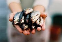 Peixe-Pesca