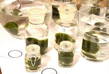 Marimo by Clo'eT / Marimo alga giapponese