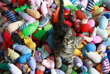 Pet Toys & Accessories / Come see awesome pet toys and accessories that would work for your pets!
