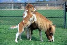 horselettes