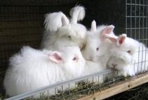 Rabbits / by Hannah Maier