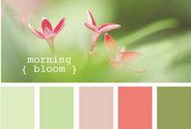 colour hause