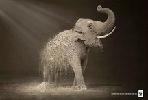 elephants / by Design Quixotic