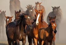 Horses & The West / Then & Now / by Donna Salinas