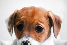 Dogs:) cute
